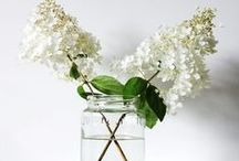 White, pure & simple / White: mostly flowers