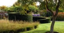 Topiary / Clipped & shaped structural plants