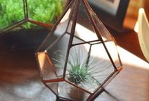 Objects, Furniture & Lighting / Inspiring items, Furniture, Curio / by Jennifer May Evans