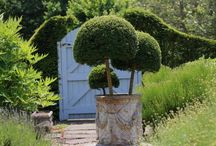 Plant Containers & Urns / Planted containers of colourful plants & classy topiary