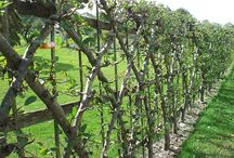 Growing fruit beautifully / All about growing fruit, productive plants that look good