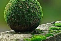 Moss & Stone