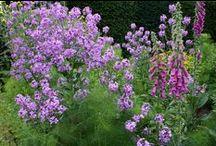 How to garden / Simple & useful gardening tips & information
