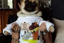 Pugs / Beautiful pugs! All shapes and sizes! Pugalicious fur babies!