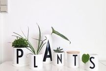 plants + flowers / indoor and outdoor plants. flower arrangements. anything that grows!