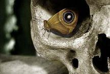 Spectacular Skulls