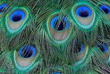 Colour inspiration / beautiful colours