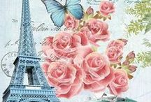 Roses & Butterfly in Paris
