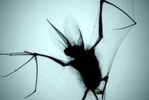 Bewitching Bats