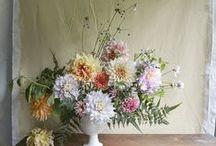 Dahlias / Some of the many shapes & colours of dahlia flowers