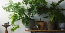 House Plants / Indoor greenery to make you feel good