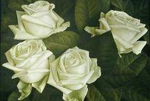 white, yellow & lavander rose