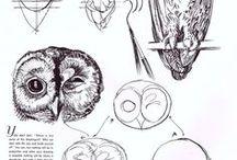 Animal Drawing Study