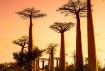 Africa: So Much To See, So Little Time / Travel to Africa. What to see from the north to the south of this amazing continent with forests, safaris, long coasts and more.