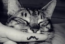 Don't mess with the Mustache1! <3
