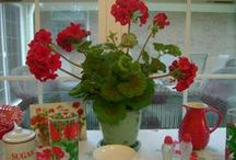 Geronimo Geraniums and other Flowers / by Blondie