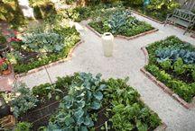 Edible garden / Garden ideas where everything produces something edible!