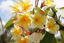 Le piante che vorrei / I fiori che vorrei sul balcone