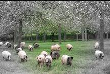 Farm Lifestyle