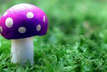 Champignons ... Mushrooms