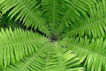 Vert ... green