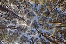 Motifs inspiration... Natural patterns
