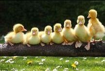 Oiseaux ... Birds