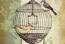 Etre en cage ... Bird cage houses
