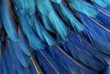 Indigo Blues / Indigo, textile dyeing, and fabric blues!