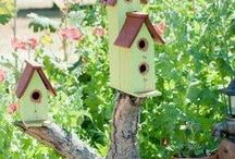 Bird houses / by Mary Smith