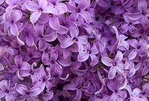 Levo Purple / Purple, purple, and more purple! / by Levo