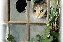 Gatti alla finestra / by Marimonte