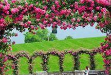 Sing of spring ⊰✿¸.•*ღ¸╭•⊰✿⊰