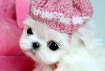 Sweet dog ⊰✿¸.•*ღ¸╭•⊰