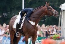 Horses, riding, equestrian / Konie,kucyki...