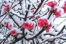 Winter •●♥ Ƹ̵̡Ӝ̵̨̄Ʒ