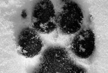 Ťapky/Paws