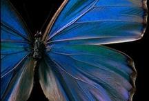 Birds, Butterflies, Bees, Moths & Dragonflies / by Debbie Fox-Naka