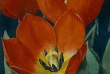De bloemen in onze tuin | The flowers in our garden / 'De bloemen in onze tuin' is het 14e Verkade plaatjesalbum. De originele aquarellen zijn tot 7 juli 2013 in het Verkade Paviljoen te bewonderen. www.zaansmuseum.nl