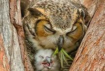 YOLO! / You Obviously Love Owls!