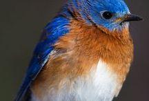 Côté oiseaux / De jolies photos sur les oiseaux