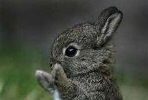 Côte animal / De jolies photos sur les animaux du monde