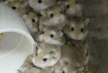 Hamster ♦ Chibi
