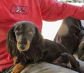 Veranstaltungen / Veranstaltungen des Hundevereins Herbolzheim