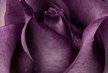Lavender & Lilac, Purple & Aubergine shades that come close / by Jeanlise Velloso Couto