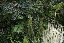 Garden Superior
