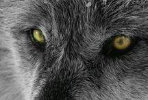 Animal Photos / ...