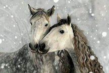 Horses / Paarden/ foto's