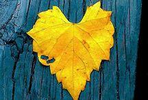Heart / Als je goed kijkt dan is er overal een hart