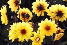 Flowers / Ahhhh, flowers!